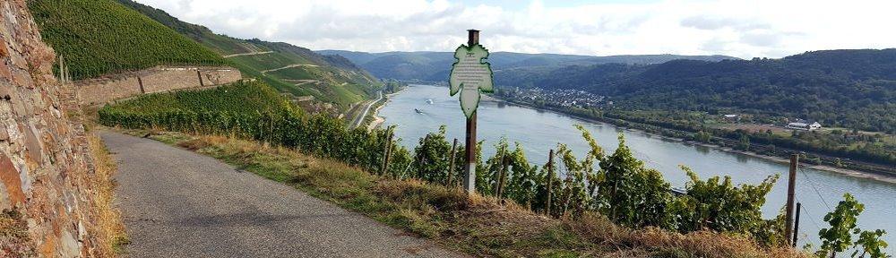 Weinlehrpfad Boppard
