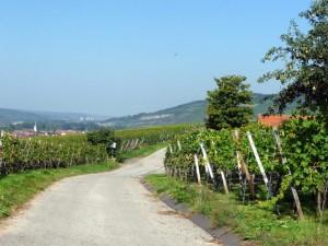 wlp_thuengersheim13_gr