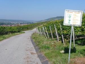 wlp_thuengersheim16_gr