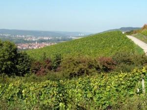 wlp_thuengersheim20_gr