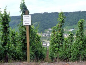 wlp_enkirch08_gr