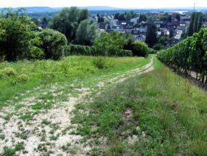 bw_hattenheim15_gr