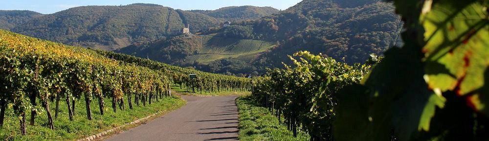 Wege zum Wein