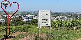 Erlebnisweg Wein und Kultur Heidelberg-Rohrbach