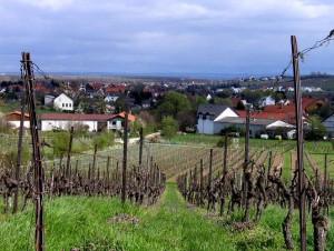 wlp_bodenheim15_gr