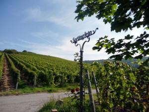wlp_thuengersheim10_gr