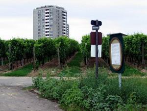 www_hochheim18_gr