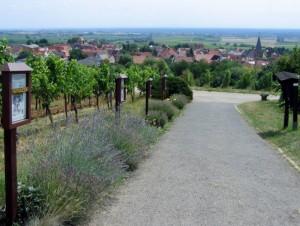 wlp_schweigen-rechtenbach24_gr