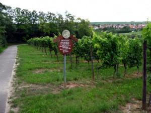 wlp_floersheim09_gr