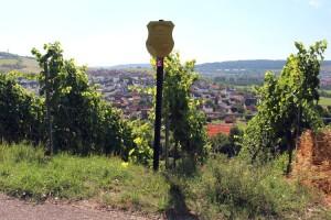 wlp_gerlachsheim_06
